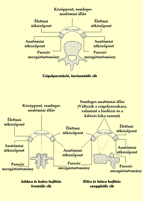 A Kimberly-modell alkalmazása, a csigolyák elfordulásának három tengelyében